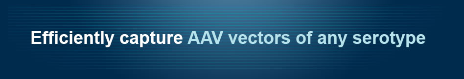 Efficiently capture AAV vectors of any serotype